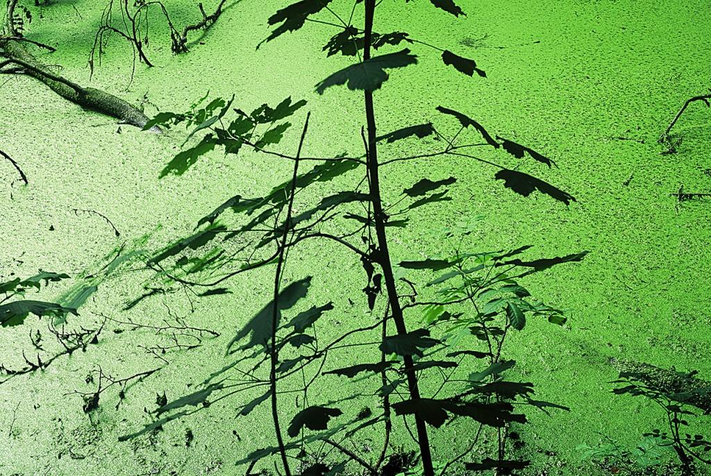Forrest_green_pond